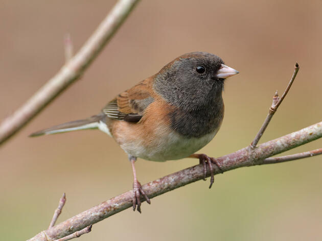 New Study Doubles the World's Number of Bird Species By Redefining 'Species'