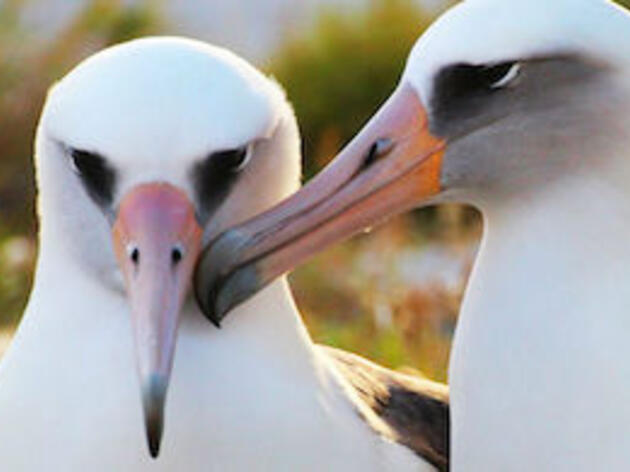 Two Bills Introduced to Reduce Building Collisions and Protect Seabirds