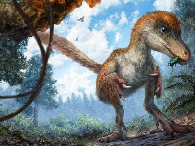 The Year in Big Ancient-Bird Discoveries