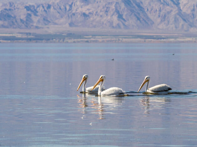 Audubon California's Bird Data Shows the Path Forward at the Salton Sea