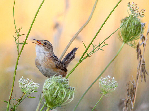 Around the World, the Soothing Sounds of Birdsong Are Used as Therapy