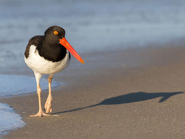Audubon Supports New Bipartisan House Bill Protecting Undeveloped Coastal Areas, Saving U.S. Tax Dollars, Promoting Public Safety