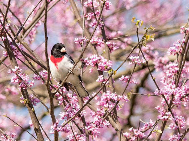 Native Plants Share the Spotlight In These Stunning Bird Photos