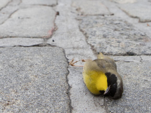 New York City Passes a Landmark Bill to Make More Buildings Bird-Friendly