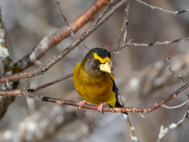 Some Wisconsin Birds Are Already Moving to Canada Due to Climate Change