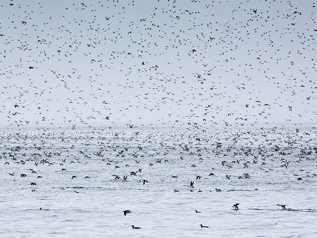 Bird Casualties Remain a Mystery After Largest-ever Oil Spill Off Canada's East Coast