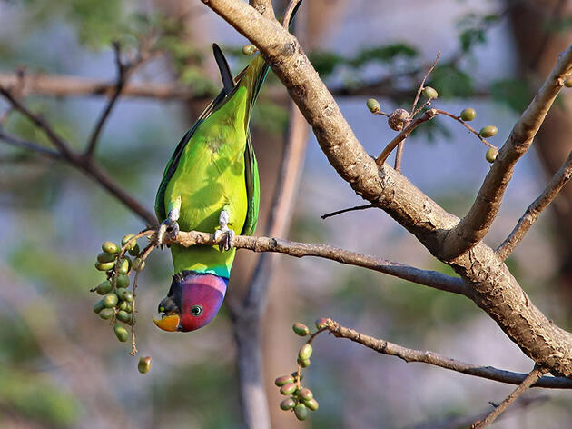 Are Parrots Strategic Eaters—or Just a Bunch of Slobs?