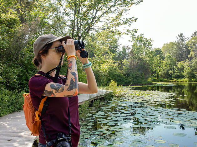 Local and Birding Information