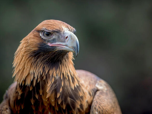 Raptors Around the World Are Still Being Massacred. What Can Be Done?