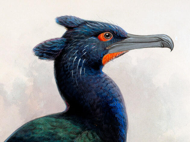 Bering Island Was a Giant, Extinct Seabird's Last Stand