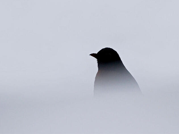 Can You Identify the Birds Behind These Creepy Calls?