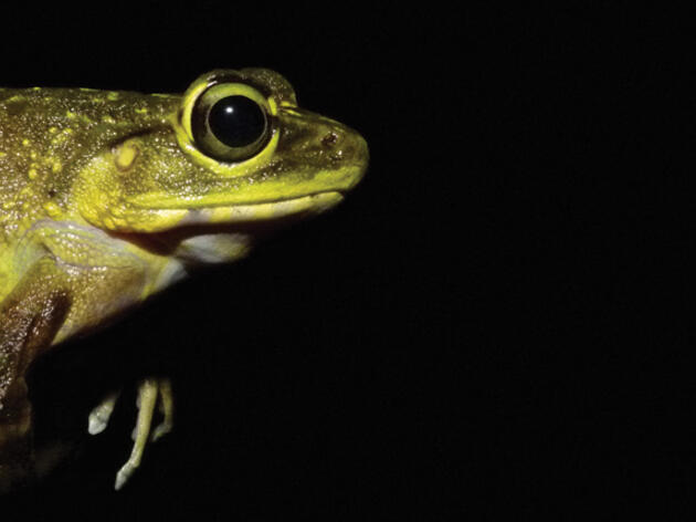 Social Networking Could Help Save Amphibians