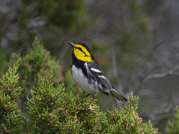 Wins for Birds in the U.S. House