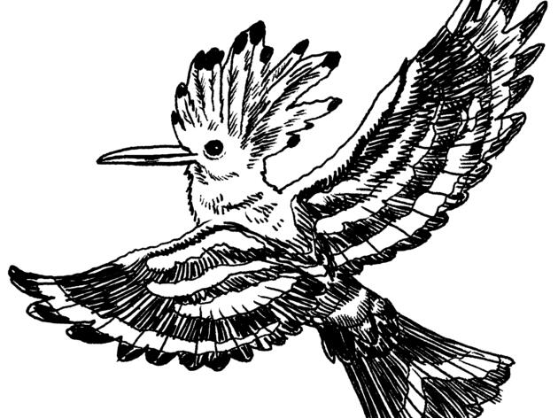 The Hoopoe: Emissary of Kings, Secreter of Stink