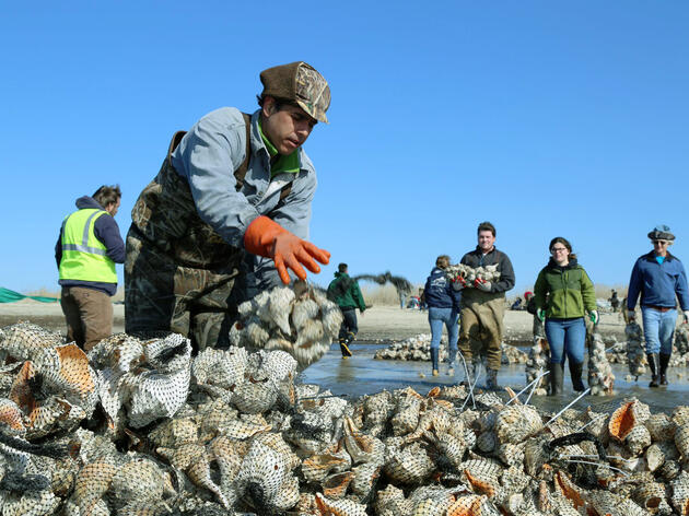 Red Knot Rescue