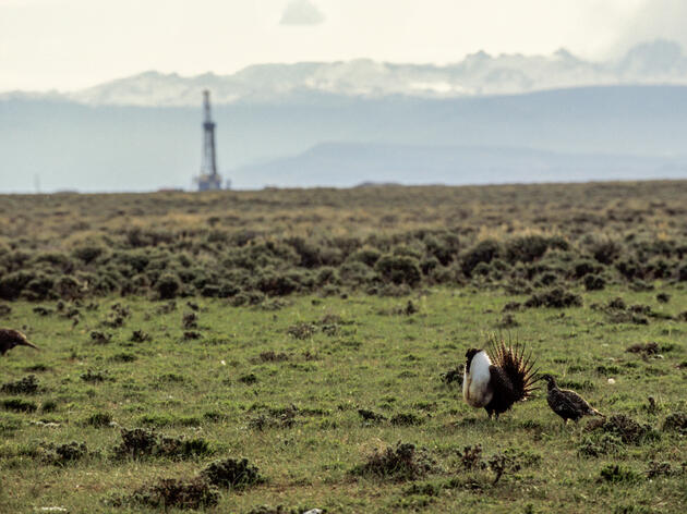 Department of the Interior Reveals Greater Sage-Grouse Conservation Plans