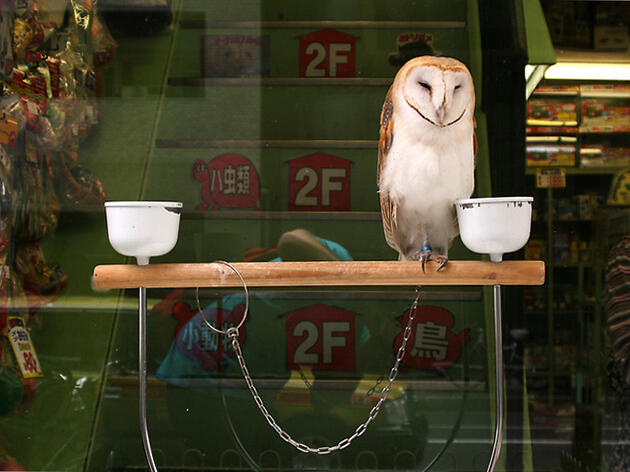 Japanese Cafés Use Live Owls to Attract Customers