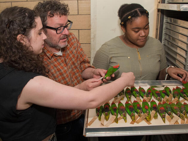 A Treasure Trove of 40,000 Bird Specimens Brought to Light