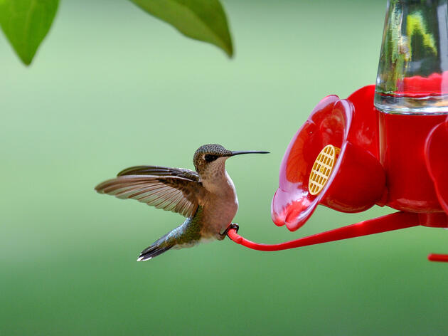 How to Keep Your Hummingbird Feeder Free from Pests