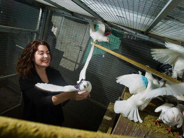 Study on Pigeon Genes Finds Yet Another Way Science Underrepresents Females