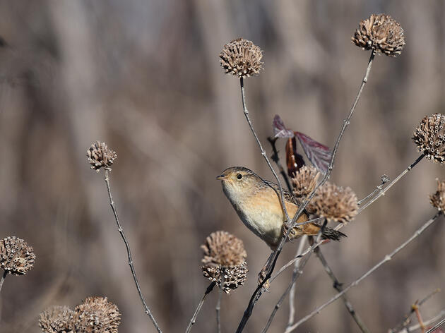 The Christmas Bird Count Is a Window to a Changing World