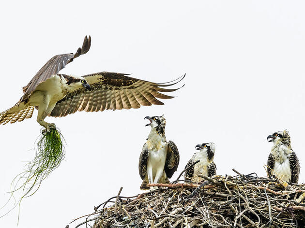 Are Birds Nesting Earlier So Their Chicks Don't Overheat?