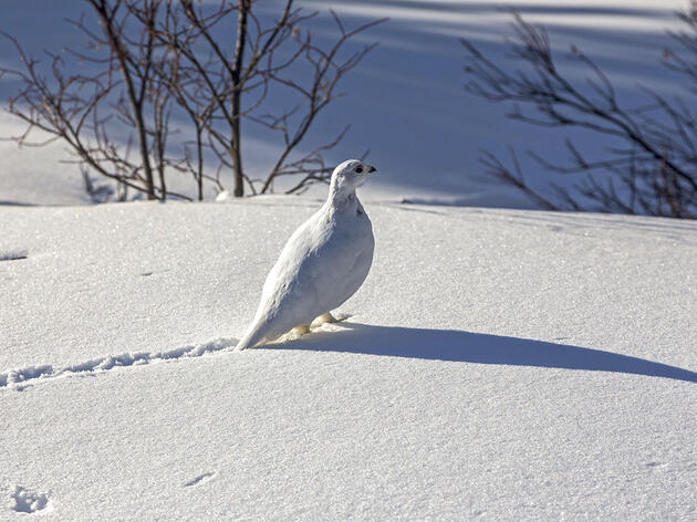 A Beginner's Guide to Reading Bird Tracks in Snow