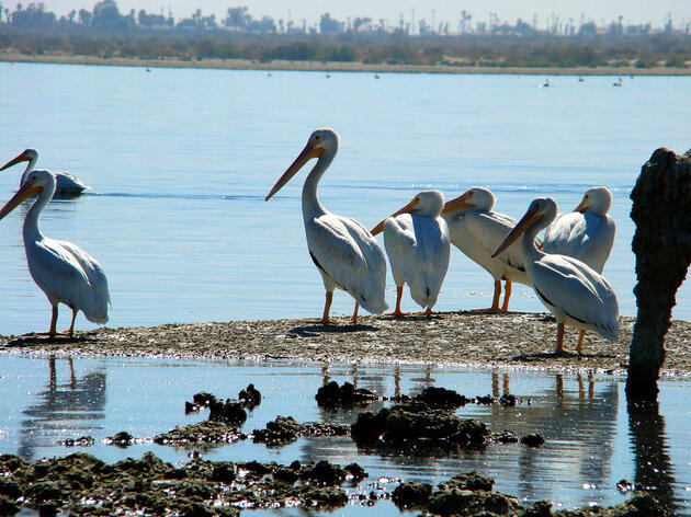 Audubon California's new Salton Sea director brings local experience to effort to preserve critical bird habitat