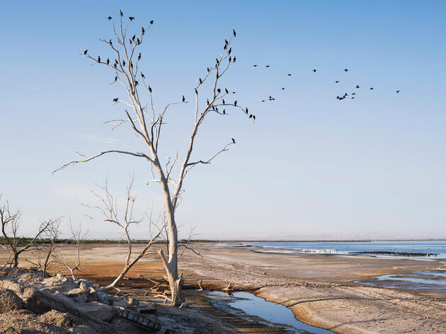 How Do We Save the Salton Sea?