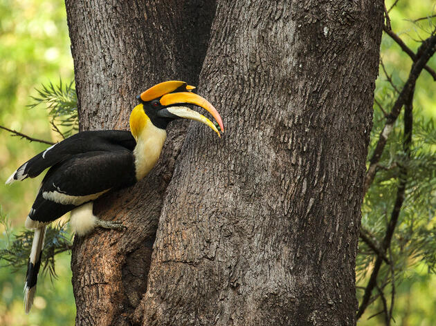 'Snake Bird' and 'Mountain Echo': What Traditional Names Teach Us About Birds