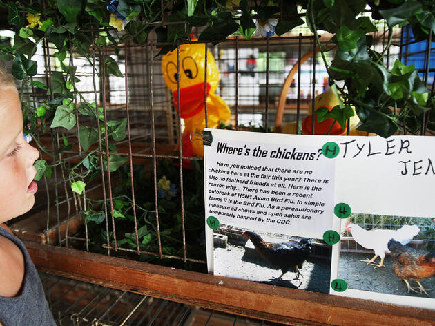 The 4-H Show Will Go On (Minus the Chickens)