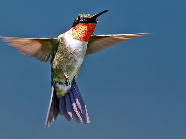 A Hummingbird for All Seasons