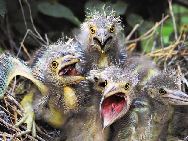 7 Baby Water Birds to Make You Squeal