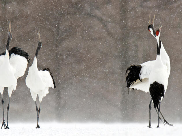 Report: Climate Change Threatens Most of the World's Bird Species