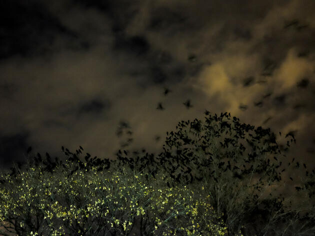 Where Crows Go at Night
