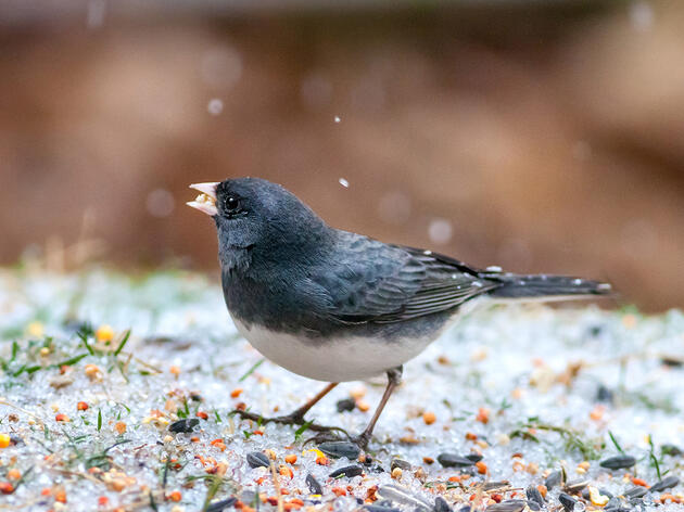How to Welcome Winter Birds