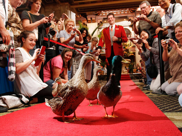 Tennessee's Most Historic Hotel Is Also Home to the Greatest Duck Tradition