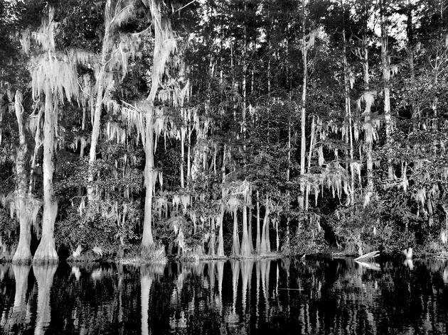 Black-and-White Photos Show Off Swamps' Inner Beauty