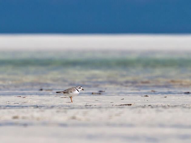New Bahamas National Park Will Protect Migratory Piping Plovers, Red Knots, Other Atlantic Coast Birds