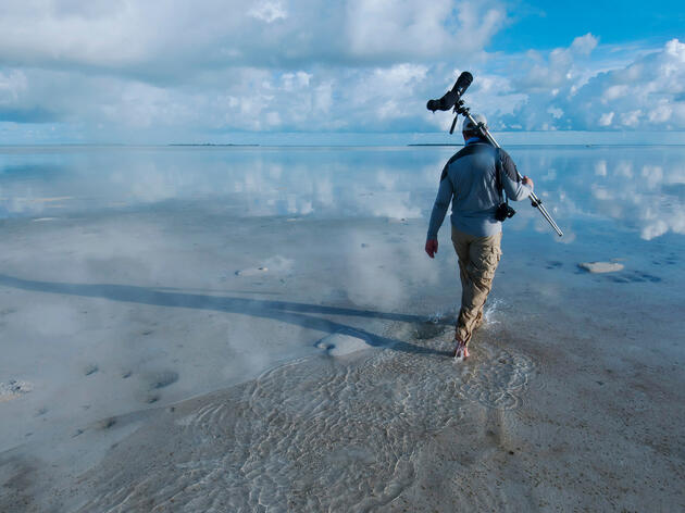 Piping Plovers Get a Protected Park in the Bahamas