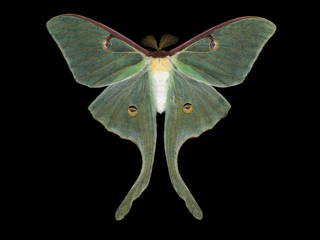 """""""Come on Over to the Dark Side,"""" Moth-lover Urges Birders"""