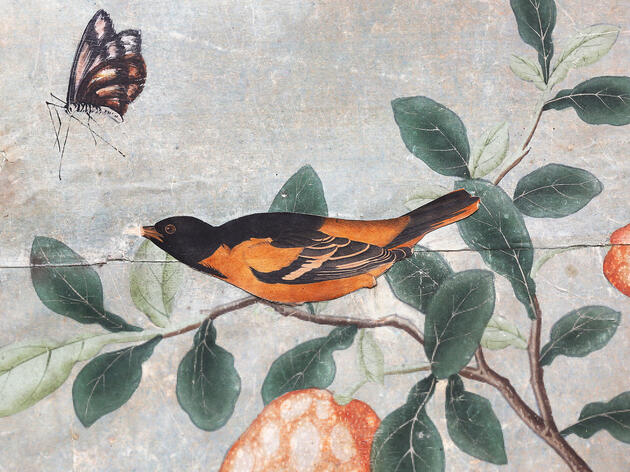 DIY For Aristocrats: Rare Audubon Prints Turned Into Fancy-Pants Wallpaper