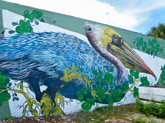 The Image Hunter 'Hunts' For Brown Pelicans in Florida