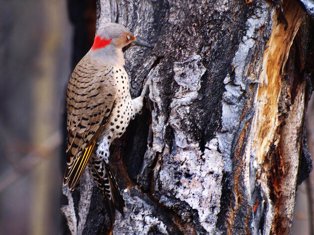 Woodpeckers as Keystone Species