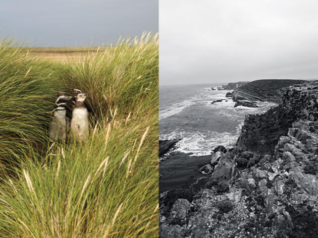 The Falkland Islands: A Birder's Grail Destination