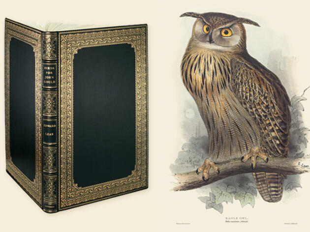 Win an Edward Lear Eagle Owl Print from the Sumptuous New Book 'Birds Drawn for John Gould'