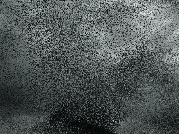 How a Flock of Birds Can Fly and Move Together