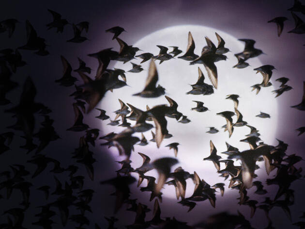 Listening to Migrating Birds at Night May Help Ensure Their Safety