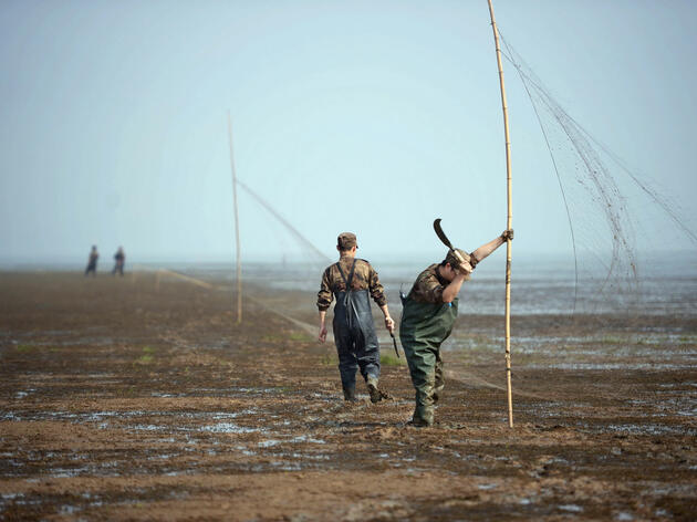 Fighting Bird Poachers at China's Poyang Lake