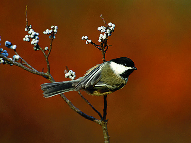Turn Your Yard Into a Winter Refueling Spot for Birds